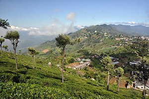 Haputale in Uva tea region
