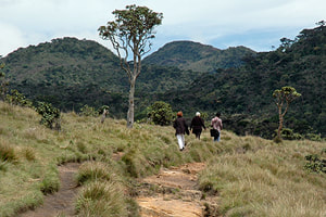 hinking on Horton Plains