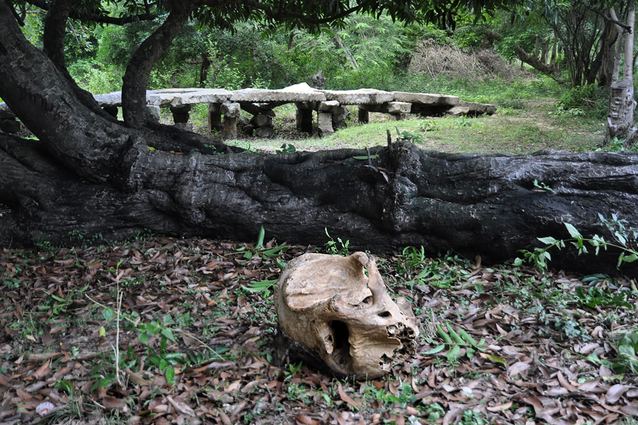 elephant skull near the stone bridge of Thiriyai