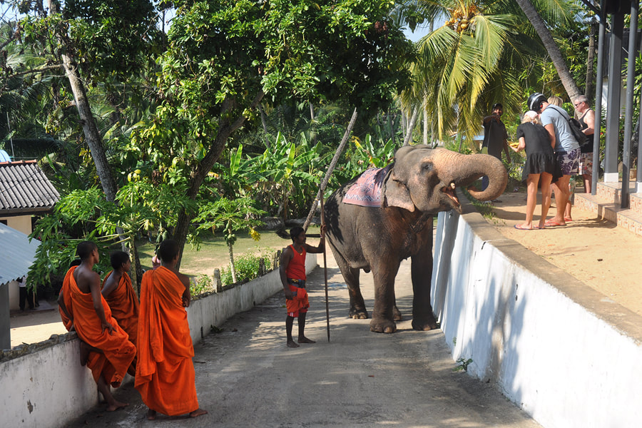 starting point of elephant rides at Kumarakanda Temple