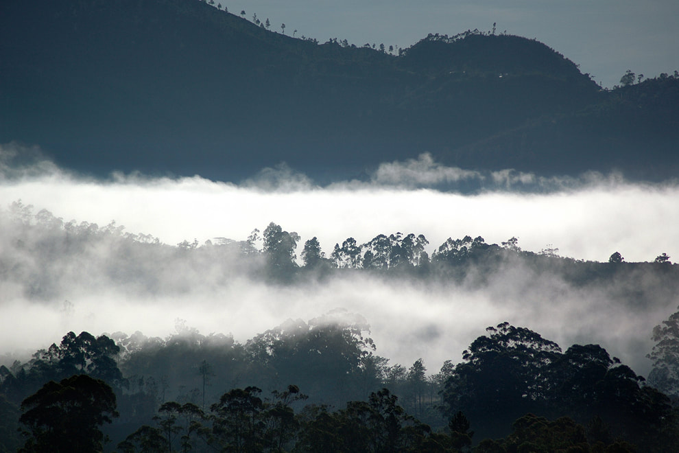 early morning fog in Ella in Sri Lanka