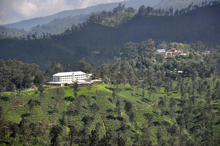 Newburg Green Tea Estate and Factory near Ella